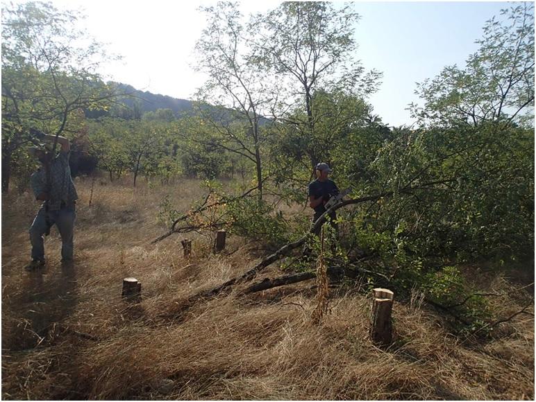 Coupe et évacuation des arbres